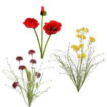 Gartenblume & Wiesenblume