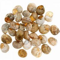 Muschel Seedekoration