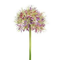Allium Hellviolett L76cm