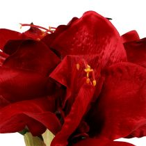 Amaryllis Rot L 73cm 2St