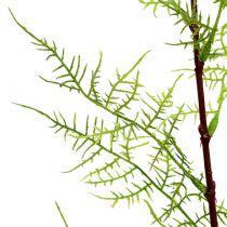 Asparaguszweig 75cm Grün 3St