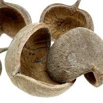Buddha Nuts 8-10cm Weiß gewaschen 10St