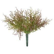Calocephalus Rosa/Grün 21,5cm