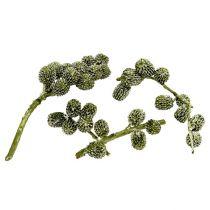 Casurina Zapfen Grün, gewachst 110g