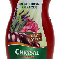 Chrysal mediterrane Pflanzen 500ml