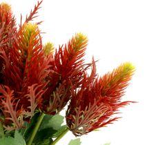 Distel Rot-Grün 20cm 12St