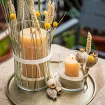 Durchgefärbte Kerzen Honigfarben Verschiedene Größen