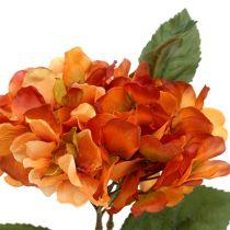 Hortensie Orange 30cm 3St