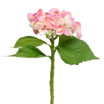 Hortensie Rosa 33cm