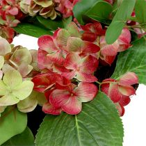 Kranz Hortensien Ø60cm Grün, Pink 1St