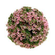 Kugelpflanze Rosa-Grün Ø18cm 1St