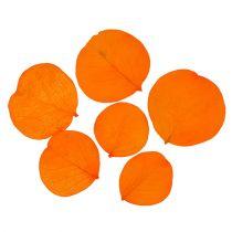 Monetablätter Apricot 50g