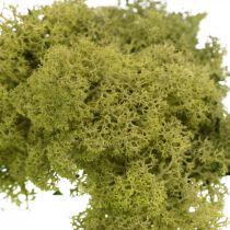 Deko Moos zum Basteln Hellgrün Naturmoos konserviert 40g