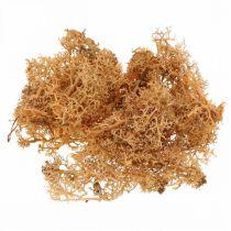 Deko Moos zum Basteln Orange Gefärbtes Naturmoos konserviert 40g
