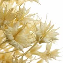 Trockenblumen Samenstand Schwarzkümmel Gebleicht 80g