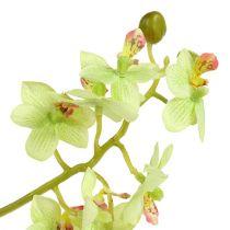 Orchidee 97cm Hellgrün