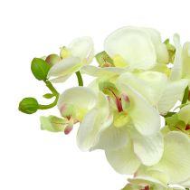 Orchidee Hellgrün 56cm 6St