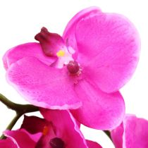 Orchidee Phalaenopsis Pink 75cm