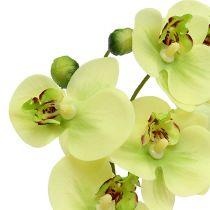 Orchideen im Topf Grün H30cm