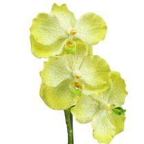 Orchidee mit Wurzeln Hellgrün L43cm