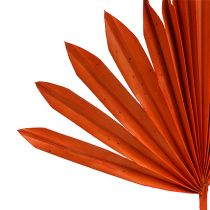 Palmspear Sun mini Orange 50St