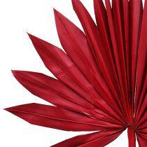 Palmspear Sun mini Rot 50St