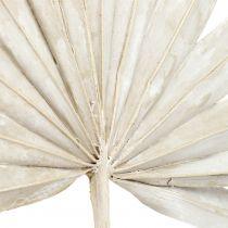 Palmspear Sun mini weißgewaschen 50St