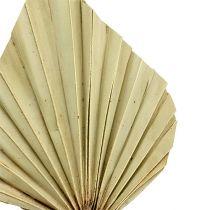 Palmspear mini Natur 100St