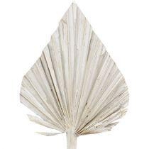 Palmspear weißgewaschen 10cm - 15cm L33cm 65St