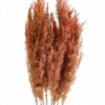 Pampasgras getrocknet Rosa Trockenfloristik 75cm Bund von 10St