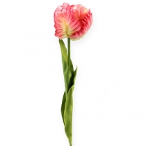 Papagei-Tulpe Pink 71cm 3St