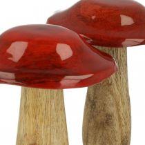 Pilz Mangoholz Rot, Natur Dekoration Herbst Ø9cm H12cm 2St