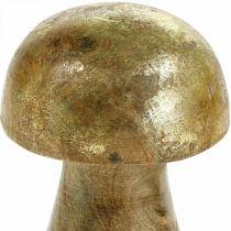 Pilz Mangoholz Gold, Natur Dekopilz Ø6cm H10cm 4St