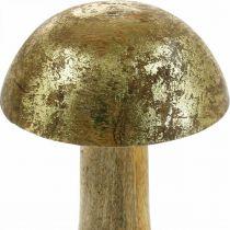 Pilz Mangoholz Gold, Natur Dekopilz Ø9cm H15,5cm 2St