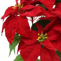 Künstlicher Weihnachtsstern Rot Kunstblumen im Topf H53cm
