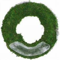 Mooskranz Pflanzring mit Reben und Moos Grün, Weiß Ø35cm