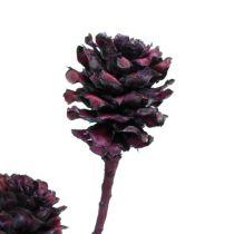 Salignum Zweige mit Zapfen Bordeaux 25St