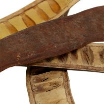 Scalettaschote Natur 25cm - 50cm 25St