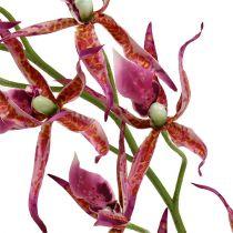 Spinnenorchideen Pink-Orange 108cm 3St