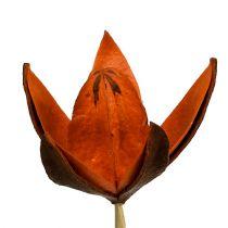Wildlilie am Stiel Orange 45St