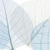 Willowblätter skelettiert Blau, Grau sortiert 200St