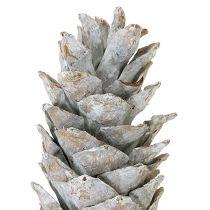 Zuckerkieferzapfen Weißgewaschen 20cm - 30cm