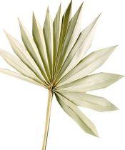 Palmspear Sun natur 30St
