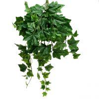 Efeuhänger Großblatt 60cm