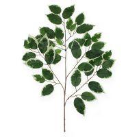 Dekozweigen Ficuszweig 60cm