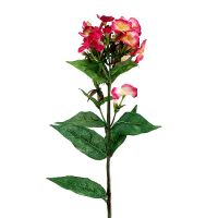 Flammenblume Pink 72cm
