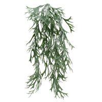 Geweihfarn Grau-Grün 60cm
