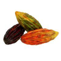 Kakaofrucht Mix 18cm Grün, Orange, Bordeaux