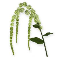 Kunstblume Amaranthus Creme 107cm