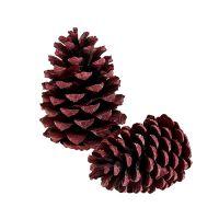 Maritima Zapfen 10-15cm Rot gefrostet 12St